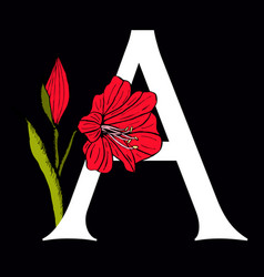 letter a with amaryllis flower vector image vector image