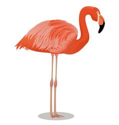 American flamingo cartoon bird vector