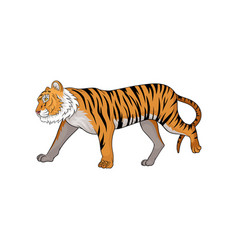 Running tiger side view vector