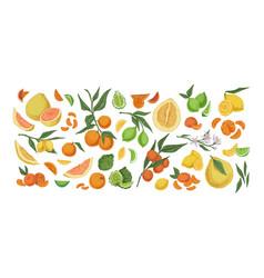 various citrus colorful fruit set hand drawn vector image