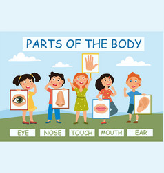 young children learning anatomy vector image