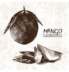 digital detailed mango hand drawn vector image vector image