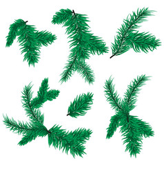 fir tree branch christmas spruce evergreen vector image