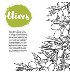 olives flyer template with border from olive vector image
