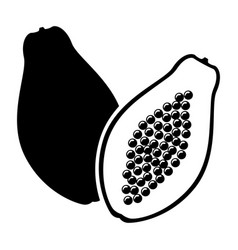 Papaya fruit image vector