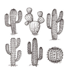 sketch cactus hand drawn desert cactuses vintage vector image