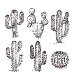 sketch cactus hand drawn desert cactuses vintage vector image