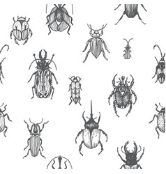 sketch of a bugs ornament vector image