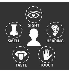 5 senses vector image