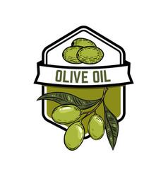 extra virgin olive oil olive branch design vector image vector image