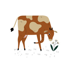 Brown spotted cow grazing on meadow dairy cattle vector