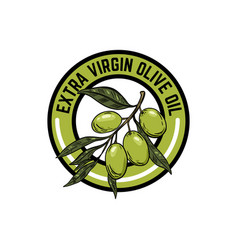 extra virgin olive oil emblem with olive branch vector image