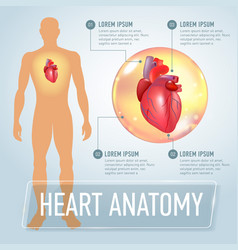 heart infographics banner vector image