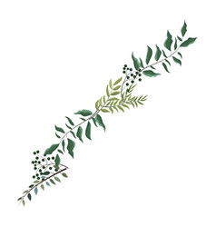leaves bouquet nature isolated vector image
