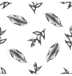 seamless pattern with black and white heliconia vector image