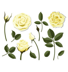 set of yellow rose flower parts vector image