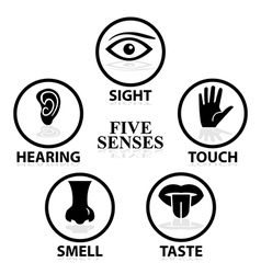 5senses2 vector image
