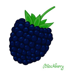 ripe blackberry isolated dewberry on white vector image