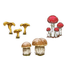 a set of different mushrooms isolated on white vector image