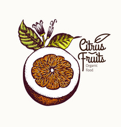 cut orange hand drawn fruit vector image