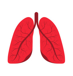 human lungs human respiratory system internal vector image