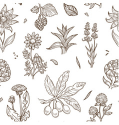 Medical herbs and herbal medicine plants sketch vector