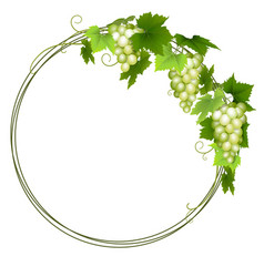 White grapes wreath vector