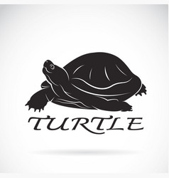 a turtle on white background reptile animal vector image