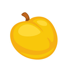 small fresh apricot vector image vector image