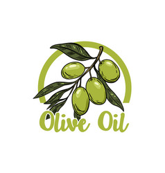 extra virgin olive oil olive branch design vector image