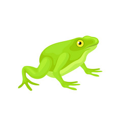 flat icon of cute frog with bright green vector image