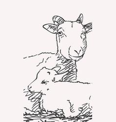 Goat and goatling together hand drawn portrait vector