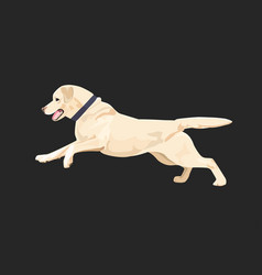 Labrador dog is running happily vector
