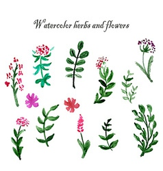 Set of watercolor herbs and flowers Design vector image