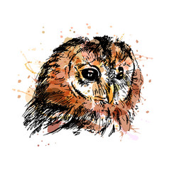 colored hand sketch owl head vector image vector image