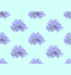 Blue purple agapanthus on light blue background vector