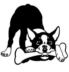 boston terrier black and white vector image