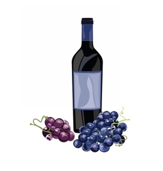 Bottle of red wine and grapes vector
