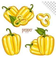 Bulgarian pepper on white background farm food vector