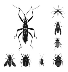 Design of insect and fly logo collection vector