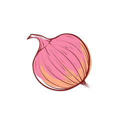 Ripe onion isolated icon vector
