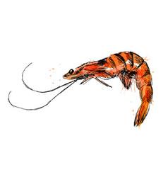 colored hand sketch shrimp vector image