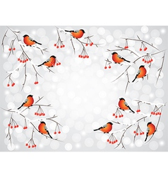 bullfinch winter background vector image