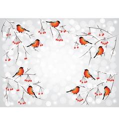 Bullfinch winter background vector