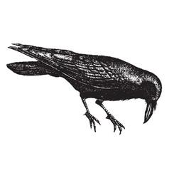 Raven vintage vector