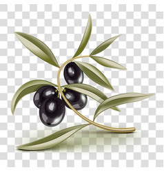 Transparent editable black olives branch vector