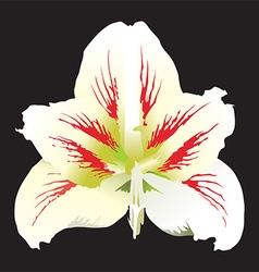 White Flower Design vector