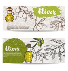 set of olive oil flyers olive branch vector image vector image