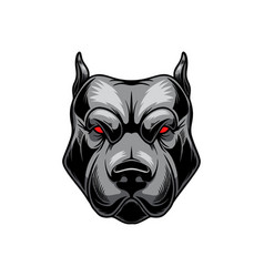 Angry pitbull head design element for logo label vector