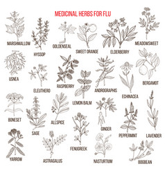 Best medicinal herbs for flu vector